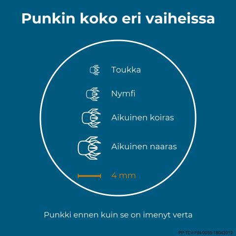 Web_infograafi_punkin_koko