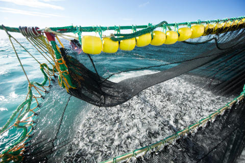 Weak Norwegian kroner leads to best ever first half year for seafood exports