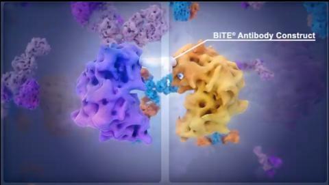 Lovande resultat för Amgens BiTE-molekyler mot svår blodcancer på ASH 2018