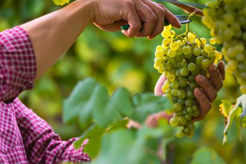 Alsace, Bourgogne, Champagne & Chablis