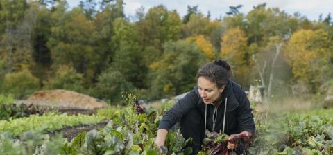 Åsa Domeij leder ny plattform för omställning till cirkulär ekonomi