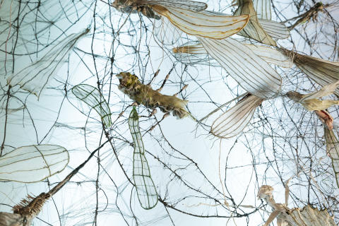 """Annika Liljedahl utforskar förvandlingens väsen i kommande utställningen """"Insekt Insikt"""""""