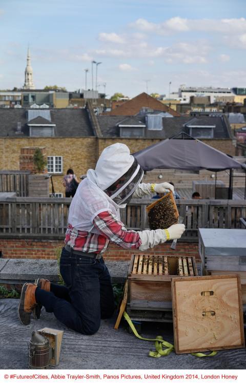 Copyright FutureofCities, Abbie Trayler-Smith, Panos Pictures, United Kingdom 2014, London Honey_02
