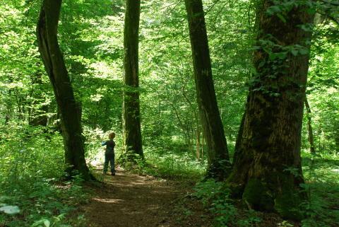 Biologisk mångfald har betydelse för alla globala hållbarhetsmål