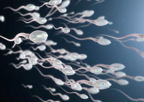 In-vitro-Fertilisation: Test unterscheidet weibliche und männliche Spermien