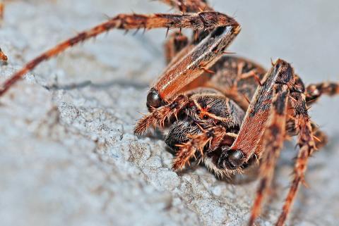 Virtual reality kan lindre frygten for edderkopper