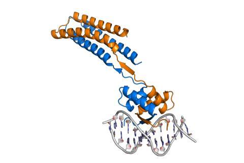Kempestiftelserna storsatsar på integrerad strukturbiologi