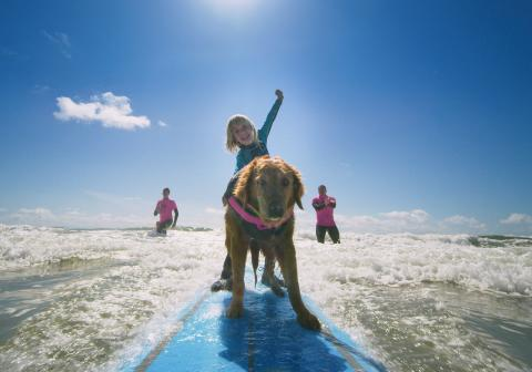 Superpower Dogs - Ricochet