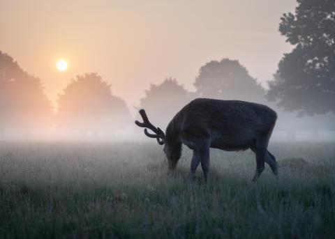 SWPA2019_Matthew Cattell_United Kingdom_Open_Natural World Wildlife