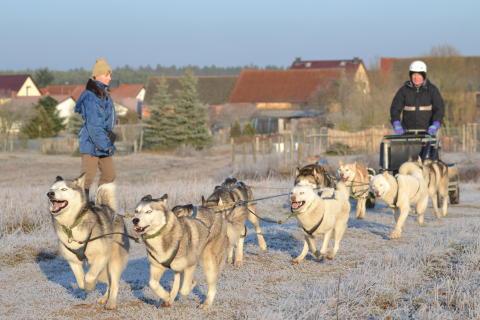Hundeschlitten Kurs Frankendorf