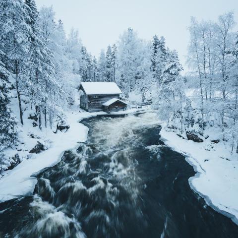 Schlitten, Schnee und Tannenbäume:  Mit #alphaddicted durch Lappland