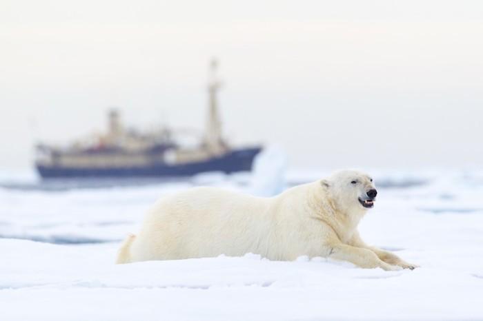 Marint expertmöte i Malmö: Klimatförändringar och skräp utmaningar för havsmiljön i Arktis