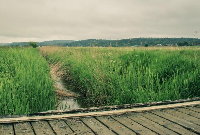 HaV i Almedalen: Fokus på vattenåtgärder och vem som ska betala