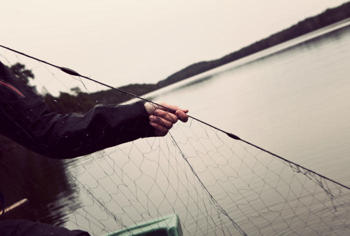 HaV föreslår nya regler för stärkt skydd för kustnära fiskbestånd från Västernorrland till Uppsala
