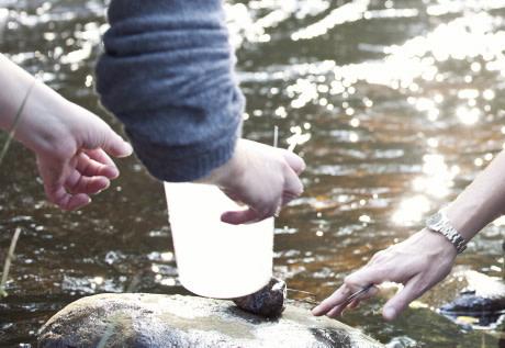 En miljon till studie om kustfiskens hälsa