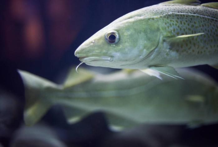 Kvoterna för 2017 års fiske i Östersjön klara