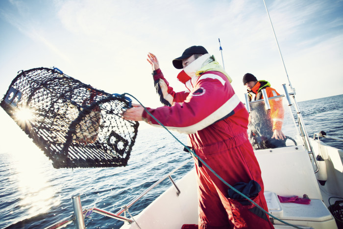 Snart start för årets hummerfiske