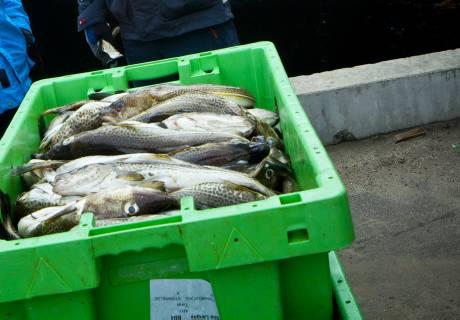 HaV får 26 miljoner för att spåra fisk
