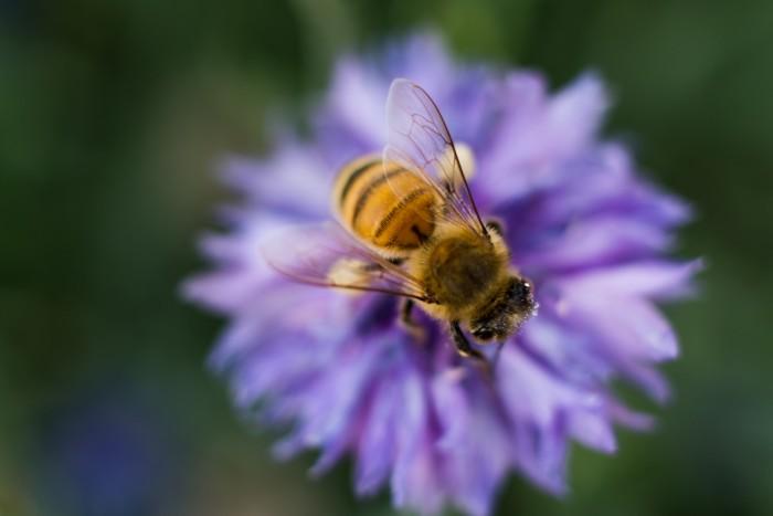 Naturnahe Gärten und Insektenschutz