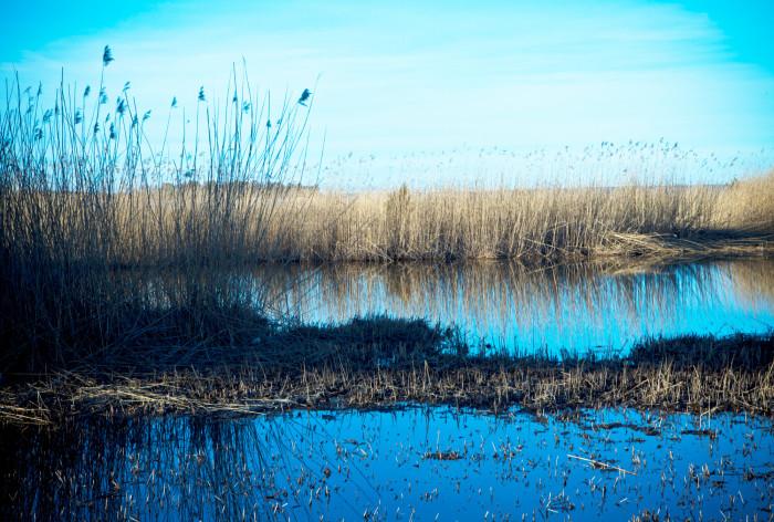 Över 400 miljoner till länsstyrelserna: Satsning på lokalt vattenvårdsarbete för minskad övergödning