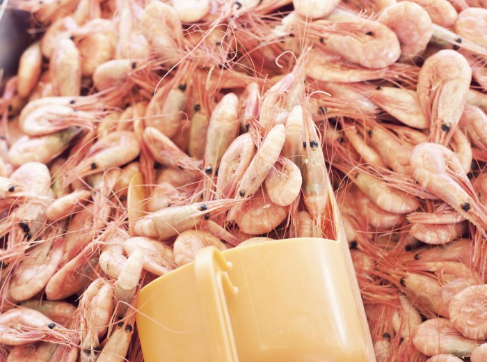 HaV-kommentar till WWF:s fiskguide: Vi har stärkt kontrollen av räkfisket