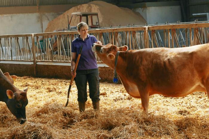 Al dansk drikkemælk fra Arla er nu fra køer fodret uden genmodificerede afgrøder