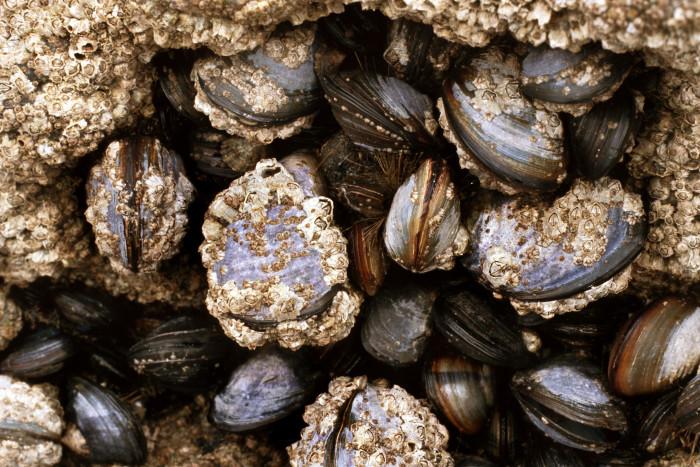 Klimatförändringar hot mot flera arter  - ny rapport föreslår havsområden som bör skyddas