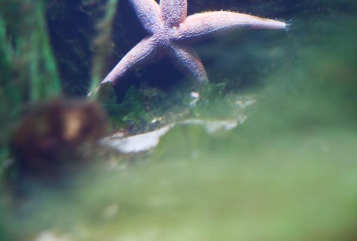 16 miljoner till länsstyrelser för att öka skyddet av marina områden