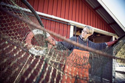 Beslut om fiskekvoter i Östersjön väntas under dagen
