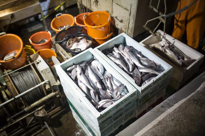 Kvoterna för 2017 års fiske i Västerhavet klara