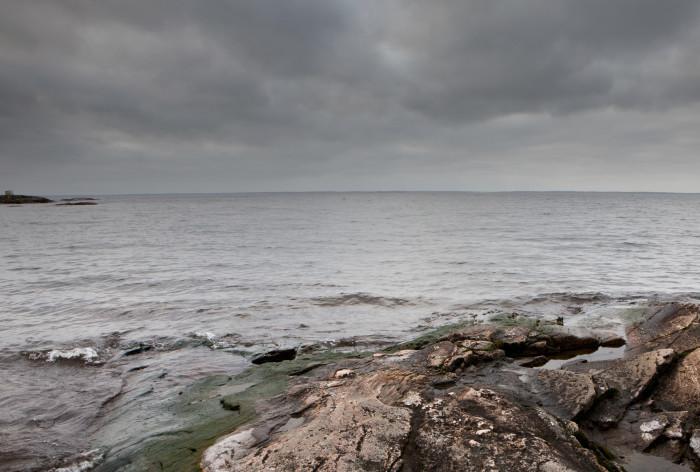 Ny rapport från HaV: Så mår fisk- och skaldjursarter i svenska vatten
