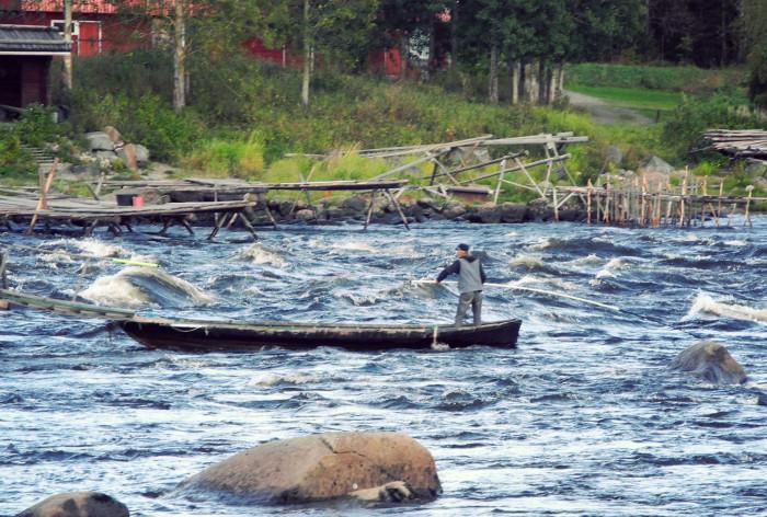 Gemensam strategi för Framtidens Fiske och Vattenbruk