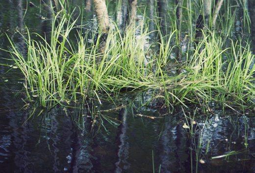 HaV ger drygt 9,6 miljoner till projekt för bättre havs- och vattenmiljö
