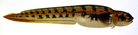 Tånglaken varnar för läget i Östersjön