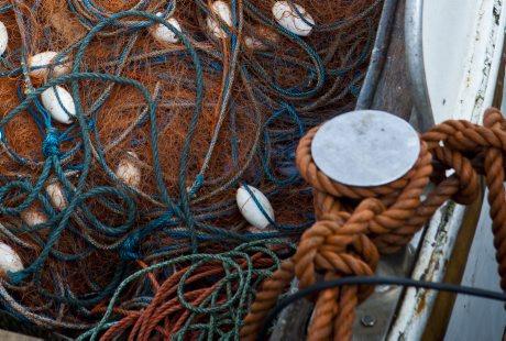 HaV öppnar åter kustfiske efter sill och skarpsill i Östersjön