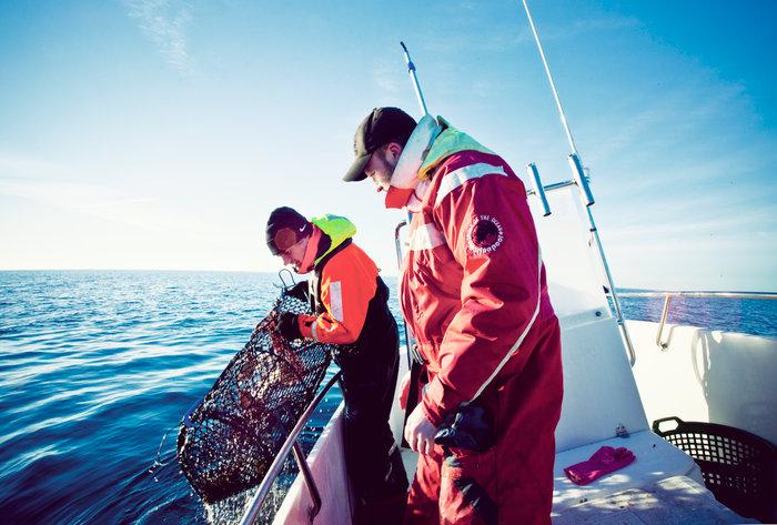 HaV föreslår nya regler för hummerfiske: