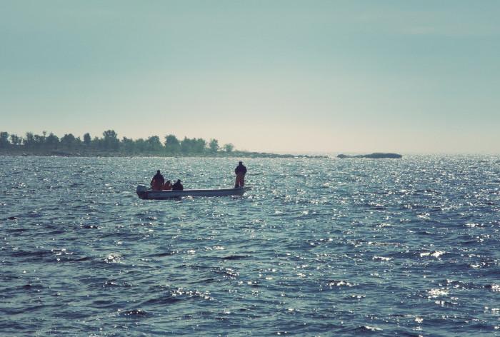Så mår svensk fisk: Negativ utveckling för siklöja och hummer – uppåt för strömming och sik