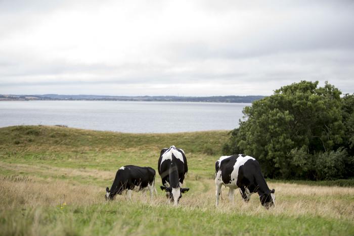 Fremtidens bæredygtige mælkeproduktion