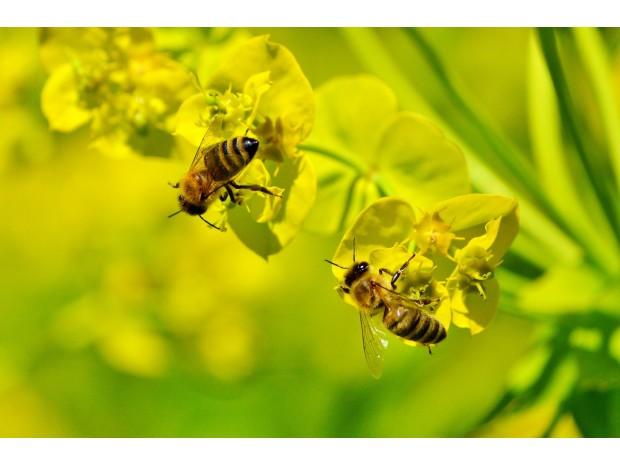 Ytterbyggs Bi-drag  till biologisk mångfald