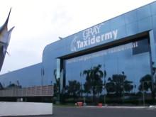 Gray Taxidermy Head Quarters