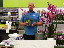 Lyckas med dina orkidéer
