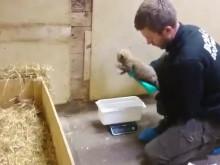 Gepardungar födda i Borås Djurpark