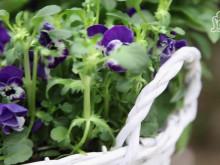 Plantera i vårkruka