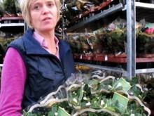 Svenska azaleaodlare stödjer Kronprinsessan Victorias fond