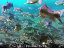 Chasing Dory. video