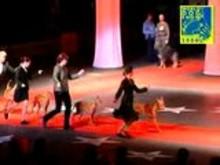 World Dog Show 2008