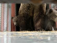 Mamman Mette och björnungarna