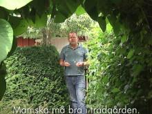 John Taylor om häckplantering