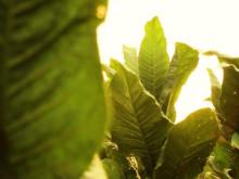 Filmen om General Green Harvest