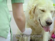 Före detta elever på djurprogrammet berättar